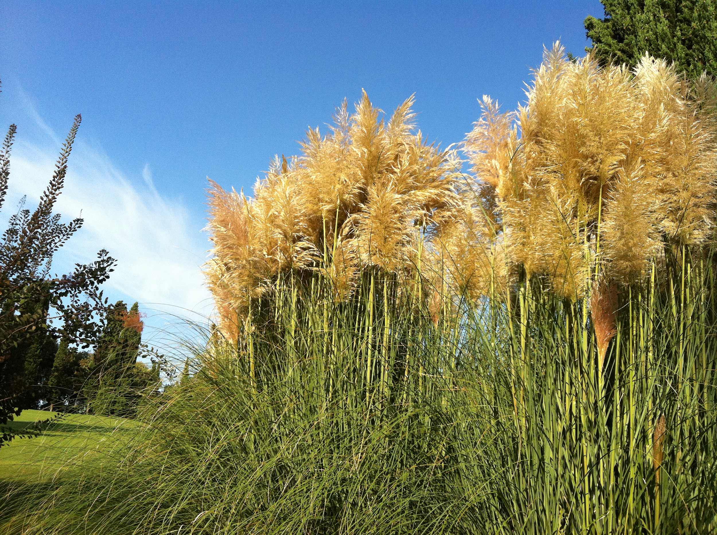 Galleria fotografica del parco giardino sigurt for Erba della pampas riproduzione